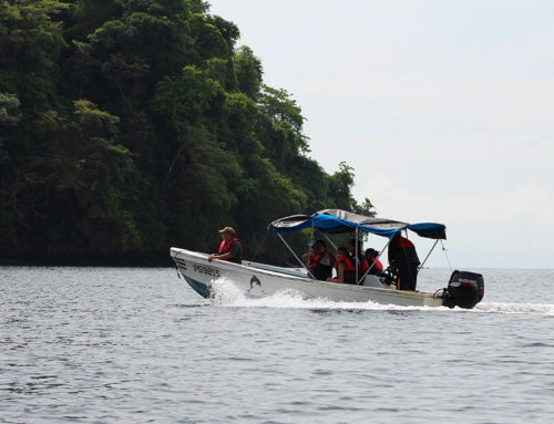 One Day Tour to Corcovado National Park